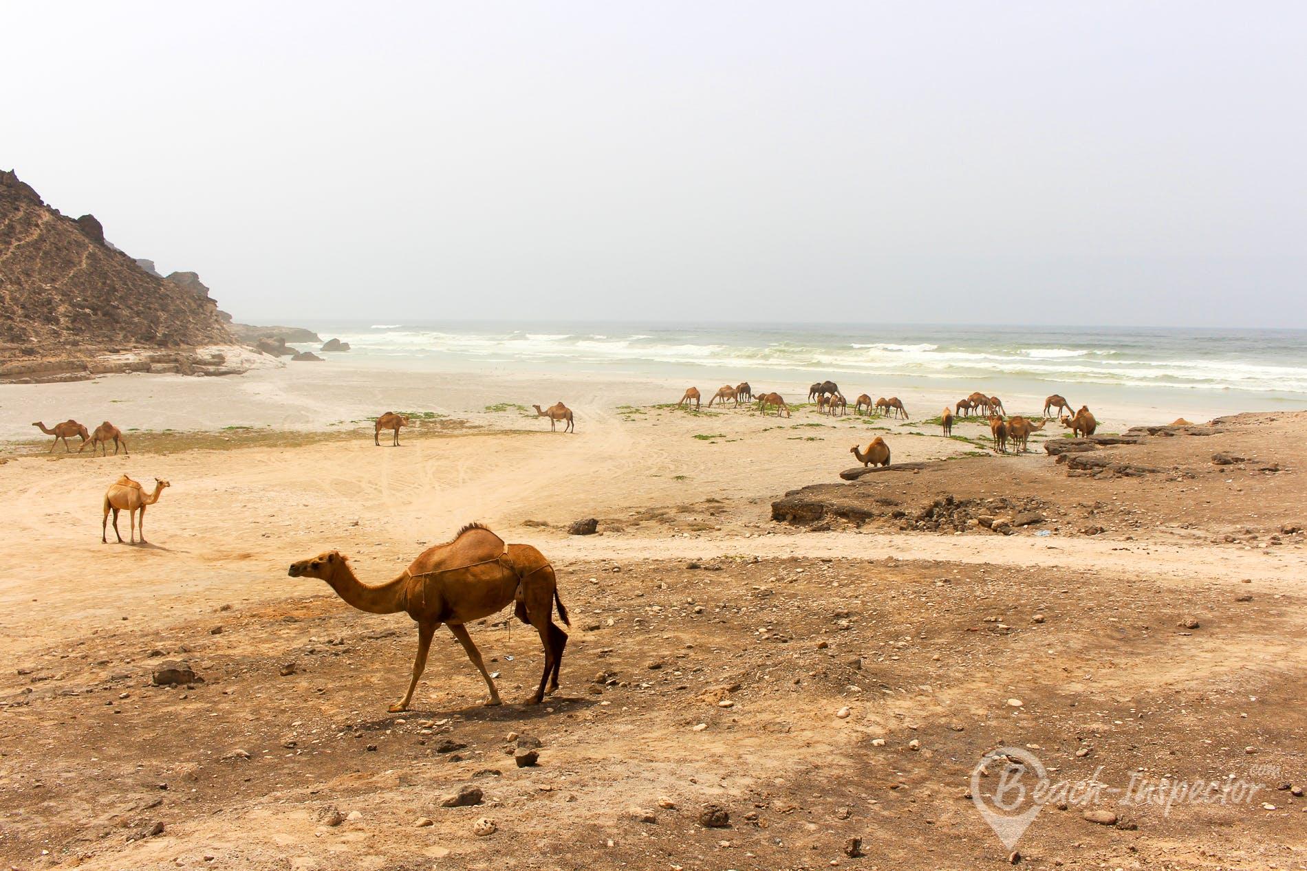 Beach Mughsail Beach, Oman, Oman