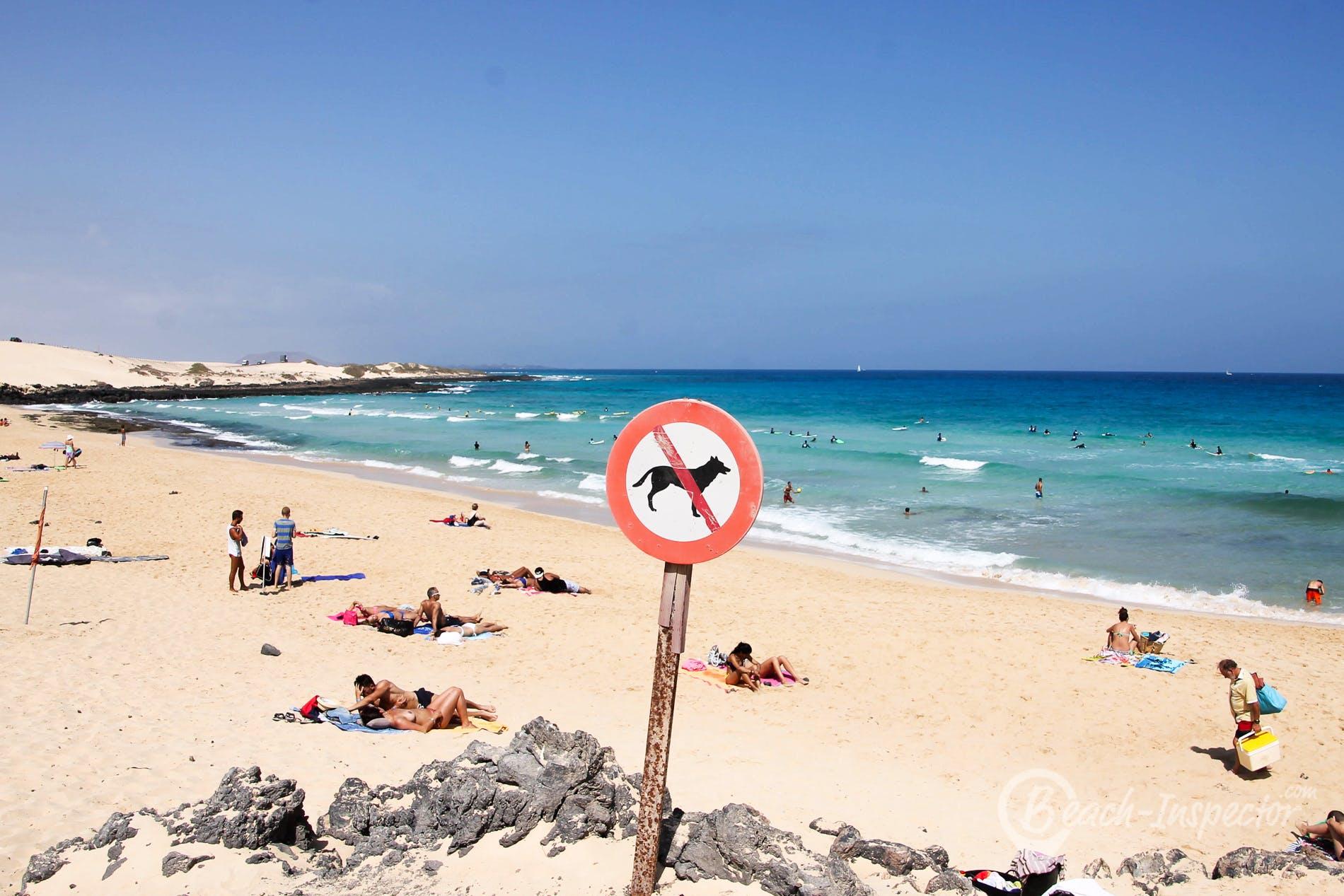 Beach Playa Alzada, Fuerteventura, Spain